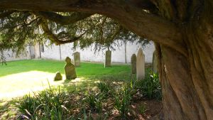 The grave tree by Kayleigh-Kaz