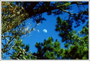 Moon Thru The Branches by dirtycar74
