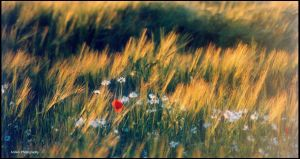 The Field by Arawn-Photography