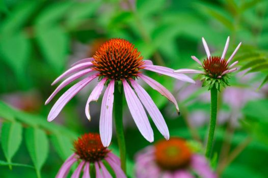 Five Rivers Flower by iheartmycamera