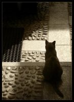 Watching, waiting... by Cohi