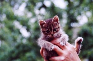 Small kept on hands kitten by krynia