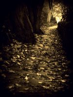 Autumns Path by totalizzyness
