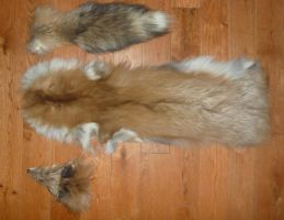 Ranched Fox pieces FOR SALE by Tricksters-Taxidermy