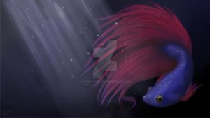 Betta by StingTop