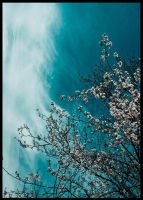 Sweep off the clouds and blossom by sNiK7
