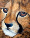 Cheetah Cub in Acrylic by andreamichael