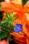 Composition In Green, Orange And Blue Flowers by aegiandyad