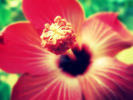Hibiscus by wolfycatlover38