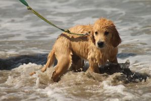 Puppy's First Day at the Beach by I-Heart-Photos