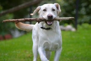 The stick lover by ClarasNisse