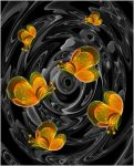 abstract-butterflys-Apo by sonafoitova