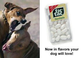 Tic Tacs for Dogs by blasticore