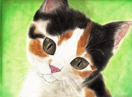Calico by Meorow