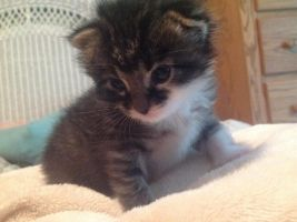 Louie at three weeks by AClockworkKitten