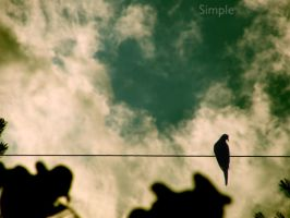 Simple by robschuhmann