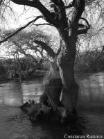 Willow in the river. by BeyondDivine