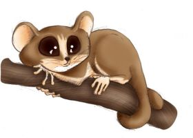 Mouse Lemur by yinyang
