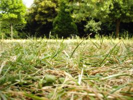 Grass Close-up by EGudenas
