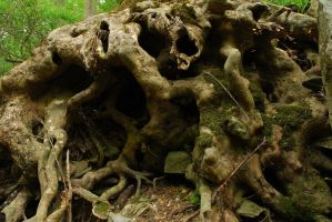 Gnarled Roots by timid-wolf