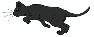 ThunderClan - Hollyleaf by WildpathOfShadowClan