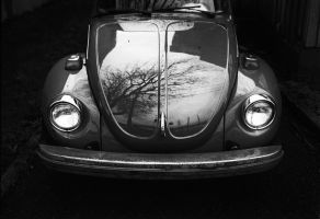 Beetle. by LaurentGiguere