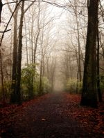 foggy november by iridel