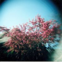 Explosion Of Pink by Lomo440