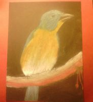 Chalked Bird 2 by sharktaiIs