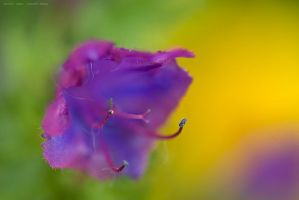 summer colour by emmbbee