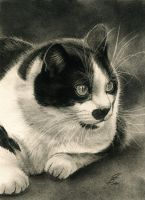 tuxedo cat in charcoal by Drehli
