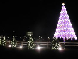 The National Christmas Tree 2013 by Flaherty56