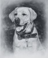 Lalbrador Dog Drawing by Drawing-Portraits
