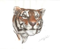 ink tiger revisited by TheOnlySarah