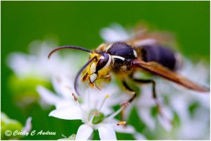 Flower Wasp by CecilyAndreuArtwork