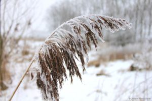 Frozen grass by jochniew