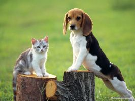 Beagle an cat by Ice-cream1122334455