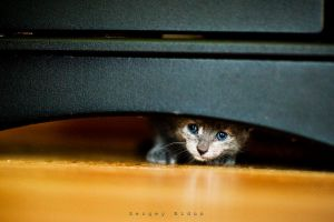 Hide and Seek.... by sergey1984