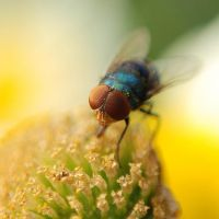 Compound Eyes by sasonian37