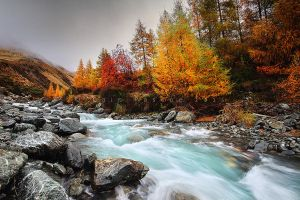 Autumn Stream by CainPascoe