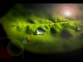 dew drops by JoeCorreia