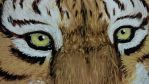 Eyes of the tiger by T-Ingles