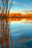 Reeds at Riverbend by MirMidPhotos