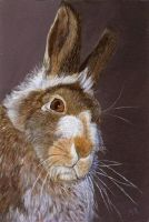 Mountain Hare by Mozisart