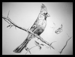 Branched Birdy by haiderali