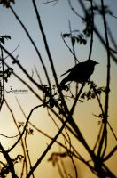 birdbetweenbranches by MisS-DxB
