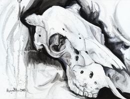 Cow Skull - Still Life Study by caroro