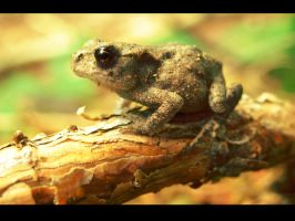 Froggy by Keiton