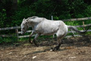 Appaloosa 60 by Spotstock