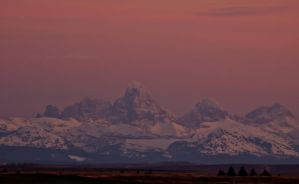 Pink Teton by melly4260